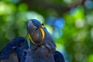 Brazil parrot photograph
