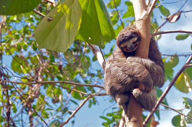 Costa Rica - Sloth photo