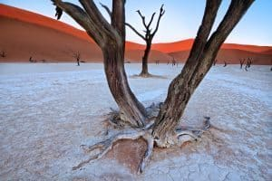Deadvlei relict features