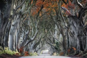 The dark hedges, Armoy