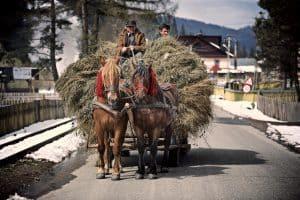 Romanian haycart